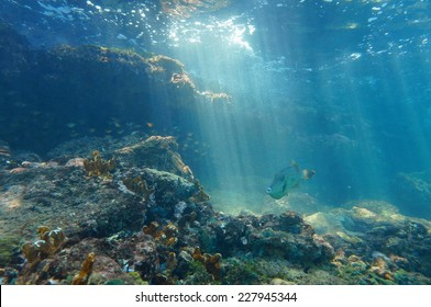 Rays of light underwater through the water surface viewed from the seabed on a reef with fish, Caribbean sea, natural scene