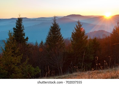 Rays of red sun setting among pines, spruce trees against smoky mountain range covered in purple grey mist under warm light cloudless sky on a warm fall evening in October. Carpathians, Ukraine