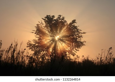 the rays of the rising sun in the tree crown