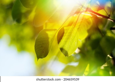rays of the summer sun shining through the green foliage of the trees