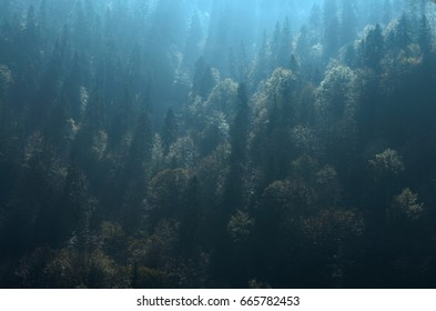 The rays of the sun break through the tops of the trees