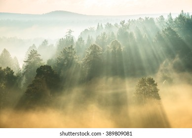 rays of the sun breaking through the fog in National Park Deer Springs