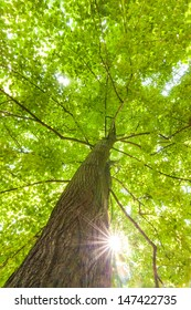 rays of the sun in the crown of deciduous tree