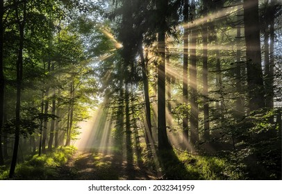 The rays of the sun in the crowns of trees. Forest sunbeams. Sunbeams in forest. Forest sunbeams scene