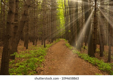 Rays of Sun in the forest with path in foreground and contrast of colors