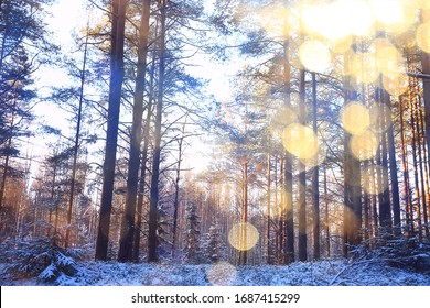rays of the sun landscape winter forest, glow landscape in a beautiful snowy forest seasonal panorama of winter