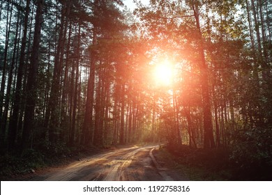 The rays of the sun make their way through the branches to the road, the dawn in the forest.