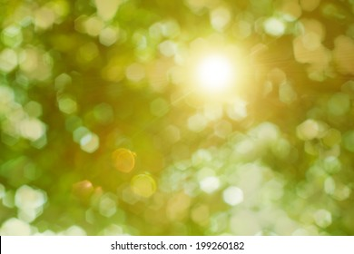 Rays of the sun shining through the trees foliage taken against the light