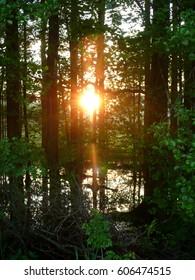 rays of sunlight az sunset through the woods over pond