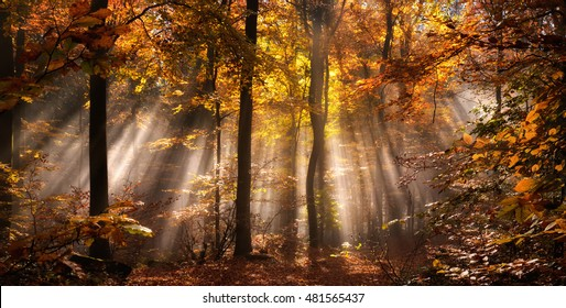 Rays of sunlight in a misty forest in autumn create a magical mood in russet colors
