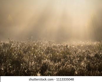 Rays of sunshine over misty heather field in autumn