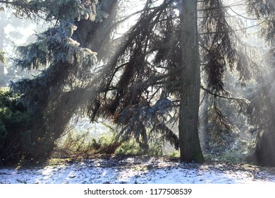 Rays in winter forest