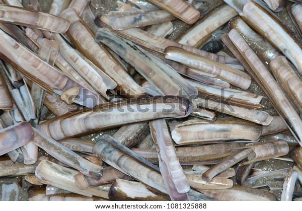 Razor clam shells