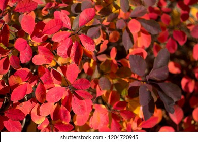 Read bright, leaves autumnal background