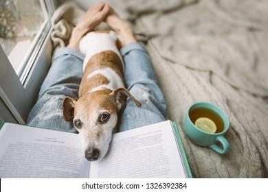 Leyendo en casa con mascota. Acogedor fin de semana casero con interesante libro, perro y té caliente. Beige y azul. Ánimo escalofriante