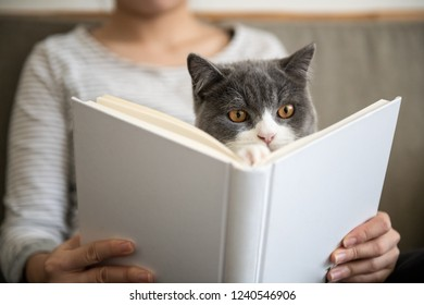 Reading with a kitten in his arms, filming indoors