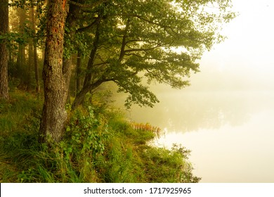 Real is beautiful. Fresh early morning mist in the forest with a lake or river. Beautiful sunrise in the woods with a fog and lake.