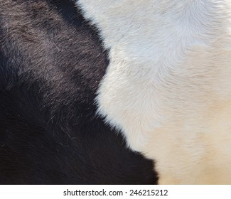 real black and white cowhide