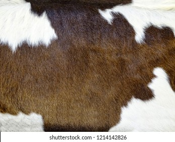 Real brown and white cow hide. Close up Cow fur texture. Animal real fur background. Detail of red and white fur of a cow. Pattern of cowhide. Leather hair with beautiful style. Skin and hair of cow.
