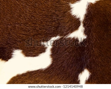 Real Brown White Cow Hide Close Stock Photo Edit Now