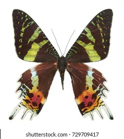 Real Butterfly Colour - Isolated - from ButterFly Collection - entomology
