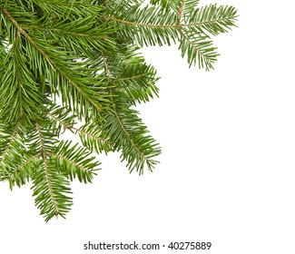 Real christmas pine in the corner, isolated on white