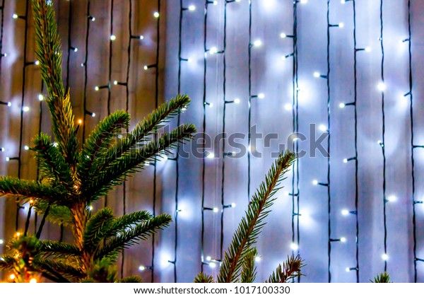 Real Christmas Tree Against Backdrop White Stock Photo Edit