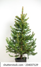 Real Christmas tree, isolated on white background. Preparing to decorate Christmas toys.