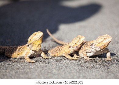 Dragon Real Stock Photos Images Photography Shutterstock
