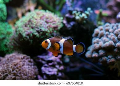 Finding Nemo Images Stock Photos Amp Vectors Shutterstock