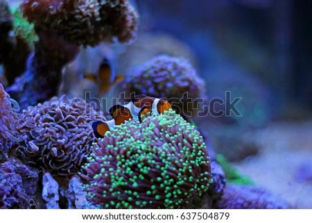 aquarium from finding nemo