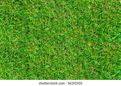 The real green grass background