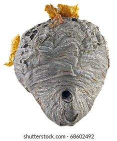 A real hornet nest with yellow leaves isolated on white background.