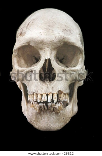 a real human skull on a black background