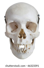 Real human skull seen from the front