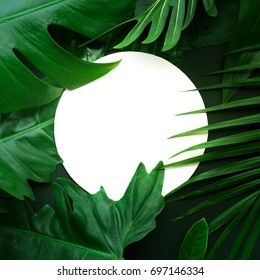 Real leaves with white copy space background.Tropical Botanical nature concepts design.