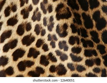 real leopard fur