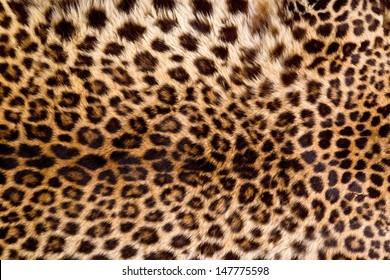 Real Leopard Skin.