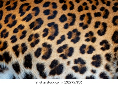 Real leopard skin texture for background