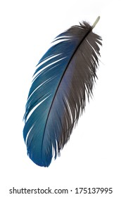 Real MACAW bird Feather. Natural colors: Blue, Teal, Grey. Isolated on white background.