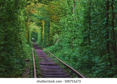 The real natural wonder - love tunnel created from trees along the railway in Ukraine, Klevan.