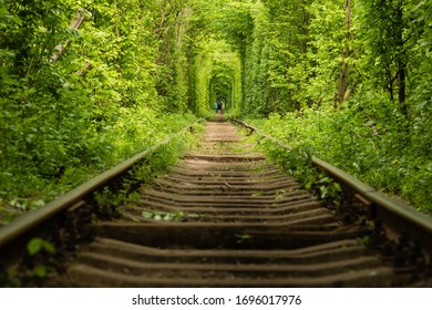 The real natural wonder Tunnel of Love created from forest trees along the railway in Ukraine, Klevan.