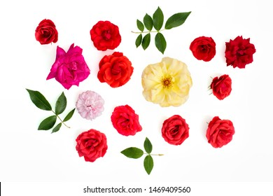Real rose flower selection. Craft cut-out or crop. White background flat-lay. Various beautiful individual petal colors and green leaves. Red pink and yellow roses. Valentine day image etc.