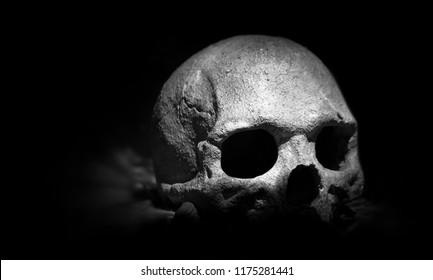 Real skull on dark background