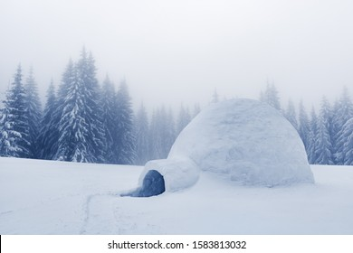 Real snow igloo house in the winter mountains. Snow-covered firs on the background. Foggy forest with snowy spruce