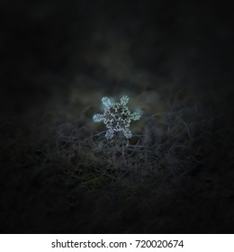Real snowflake at high magnification. Macro photo of stellar dendrite snow crystal with beautiful inner pattern and asymmetrical central hexagon. Snowflake glowing on dark gray wool background.