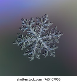 Real snowflake at high magnification. Macro photo of large stellar dendrite snow crystal with complex, elegant structure, six long ornate arms and small center. Snowflake glowing on dark background.