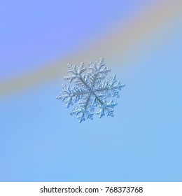 Real snowflake macro photo: large stellar dendrite snow crystal with fine hexagonal symmetry, complex elegant shape and long, ornate arms. Snowflake glittering on light blue gradient background.
