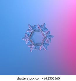 Real snowflake macro photo: small star plate snow crystal with six short, glossy arms and large, flat and empty central hexagon. Snowflake glittering on smooth blue - pink gradient background.
