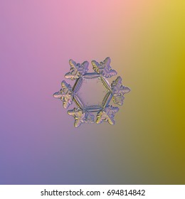 Real snowflake macro photo: snow crystal of star plate type with simple shape and fine hexagonal symmetry, six short, broad arms with glossy surface, large and flat central hexagon.